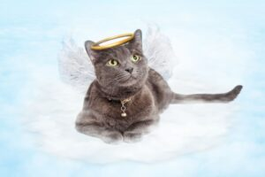 Cats as Angels